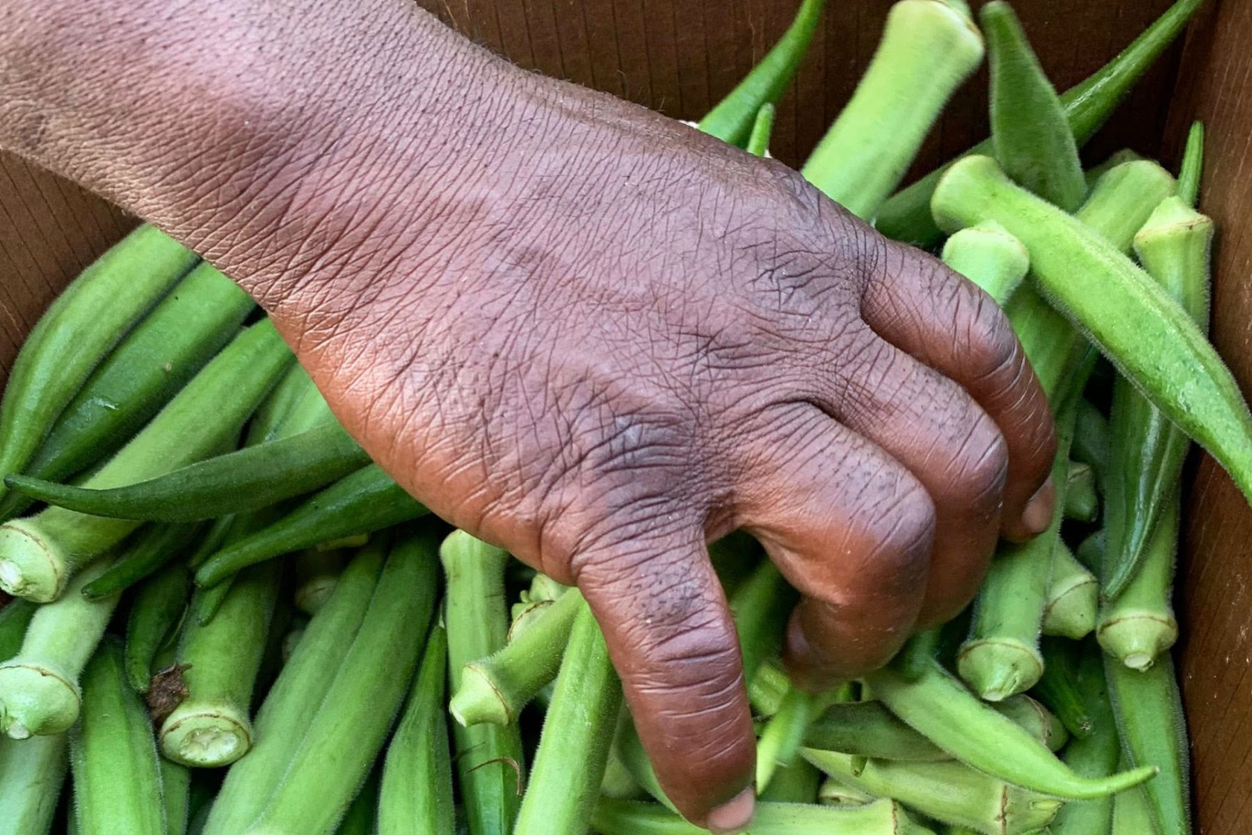 Woman grabbing a handful of okra from a cardboard box